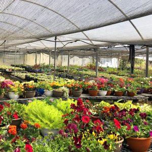 flowers kfar idud