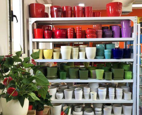 potted plants Kfar Idud